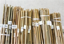Tuteurs Bambous